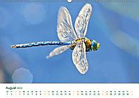 Die Welt der Libellen (Wandkalender 2019 DIN A2 quer) - Produktdetailbild 8