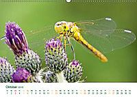 Die Welt der Libellen (Wandkalender 2019 DIN A2 quer) - Produktdetailbild 10
