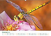Die Welt der Libellen (Wandkalender 2019 DIN A2 quer) - Produktdetailbild 11