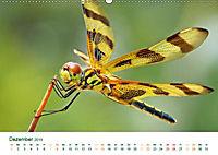 Die Welt der Libellen (Wandkalender 2019 DIN A2 quer) - Produktdetailbild 12