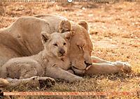 Die Welt der Löwen (Wandkalender 2019 DIN A2 quer) - Produktdetailbild 12