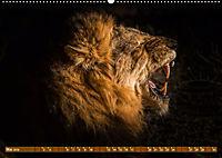 Die Welt der Löwen (Wandkalender 2019 DIN A2 quer) - Produktdetailbild 5