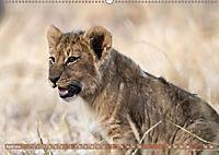 Die Welt der Löwen (Wandkalender 2019 DIN A2 quer) - Produktdetailbild 4