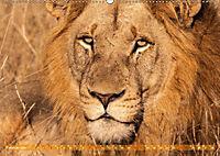 Die Welt der Löwen (Wandkalender 2019 DIN A2 quer) - Produktdetailbild 2