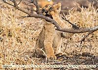 Die Welt der Löwen (Wandkalender 2019 DIN A2 quer) - Produktdetailbild 10
