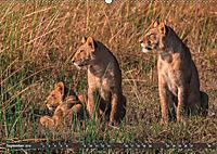 Die Welt der Löwen (Wandkalender 2019 DIN A2 quer) - Produktdetailbild 9