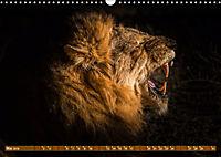 Die Welt der Löwen (Wandkalender 2019 DIN A3 quer) - Produktdetailbild 5