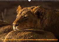 Die Welt der Löwen (Wandkalender 2019 DIN A3 quer) - Produktdetailbild 3