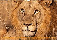 Die Welt der Löwen (Wandkalender 2019 DIN A3 quer) - Produktdetailbild 2