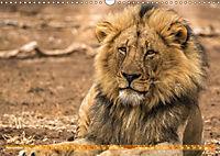 Die Welt der Löwen (Wandkalender 2019 DIN A3 quer) - Produktdetailbild 11