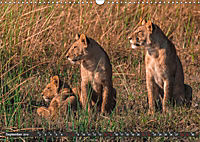 Die Welt der Löwen (Wandkalender 2019 DIN A3 quer) - Produktdetailbild 9