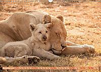 Die Welt der Löwen (Wandkalender 2019 DIN A3 quer) - Produktdetailbild 12