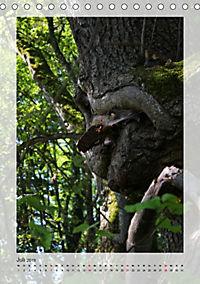 Die Wessobrunner Tassilolinde (Tischkalender 2019 DIN A5 hoch) - Produktdetailbild 7