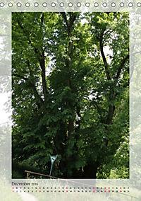 Die Wessobrunner Tassilolinde (Tischkalender 2019 DIN A5 hoch) - Produktdetailbild 12