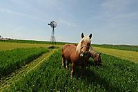 Die wilde Farm - Produktdetailbild 4