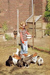 Die Wilden Hühner - Produktdetailbild 8