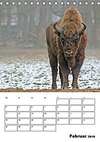 Die Wisente sind los (Tischkalender 2019 DIN A5 hoch) - Produktdetailbild 2