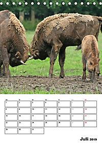 Die Wisente sind los (Tischkalender 2019 DIN A5 hoch) - Produktdetailbild 7