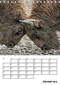 Die Wisente sind los (Tischkalender 2019 DIN A5 hoch) - Produktdetailbild 1