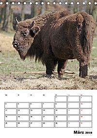Die Wisente sind los (Tischkalender 2019 DIN A5 hoch) - Produktdetailbild 3