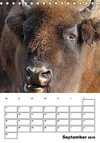 Die Wisente sind los (Tischkalender 2019 DIN A5 hoch) - Produktdetailbild 9