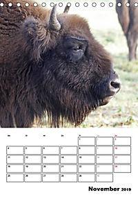 Die Wisente sind los (Tischkalender 2019 DIN A5 hoch) - Produktdetailbild 11