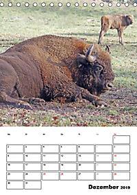 Die Wisente sind los (Tischkalender 2019 DIN A5 hoch) - Produktdetailbild 12