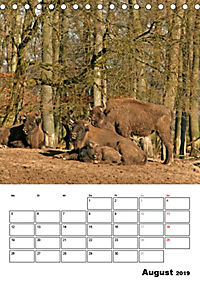 Die Wisente sind los (Tischkalender 2019 DIN A5 hoch) - Produktdetailbild 8