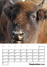 Die Wisente sind los (Wandkalender 2019 DIN A3 hoch) - Produktdetailbild 9