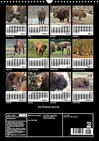 Die Wisente sind los (Wandkalender 2019 DIN A3 hoch) - Produktdetailbild 13