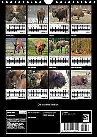 Die Wisente sind los (Wandkalender 2019 DIN A4 hoch) - Produktdetailbild 4