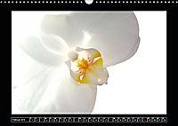Digitale Kunst und Natur (Wandkalender 2019 DIN A3 quer) - Produktdetailbild 2