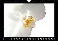 Digitale Kunst und Natur (Wandkalender 2019 DIN A4 quer) - Produktdetailbild 2