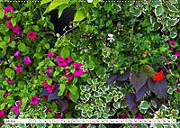 Diva Natur (Wandkalender 2019 DIN A2 quer) - Produktdetailbild 7