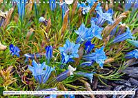 Diva Natur (Wandkalender 2019 DIN A4 quer) - Produktdetailbild 9