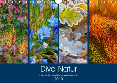 Diva Natur (Wandkalender 2019 DIN A4 quer), Birgit Seifert