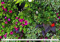 Diva Natur (Wandkalender 2019 DIN A4 quer) - Produktdetailbild 7