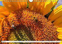 Diva Natur (Wandkalender 2019 DIN A4 quer) - Produktdetailbild 6