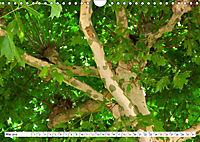 Diva Natur (Wandkalender 2019 DIN A4 quer) - Produktdetailbild 5