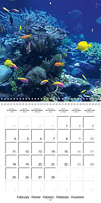Diving - The wonderful water world (Wall Calendar 2019 300 × 300 mm Square) - Produktdetailbild 2