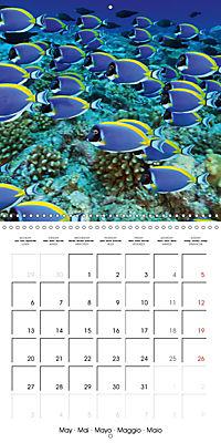 Diving - The wonderful water world (Wall Calendar 2019 300 × 300 mm Square) - Produktdetailbild 5