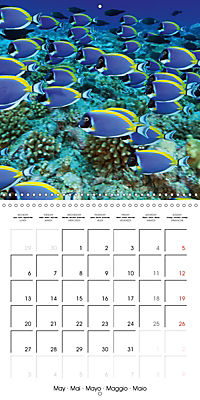 Diving - The wonderful water world (Wall Calendar 2019 300 × 300 mm Square) - Produktdetailbild 5