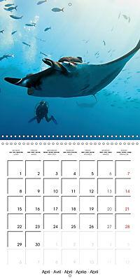 Diving - The wonderful water world (Wall Calendar 2019 300 × 300 mm Square) - Produktdetailbild 4