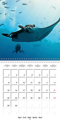 Diving - The wonderful water world (Wall Calendar 2019 300 × 300 mm Square) - Produktdetailbild 4
