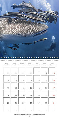 Diving - The wonderful water world (Wall Calendar 2019 300 × 300 mm Square) - Produktdetailbild 3