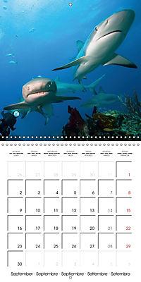 Diving - The wonderful water world (Wall Calendar 2019 300 × 300 mm Square) - Produktdetailbild 9