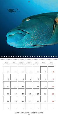 Diving - The wonderful water world (Wall Calendar 2019 300 × 300 mm Square) - Produktdetailbild 6
