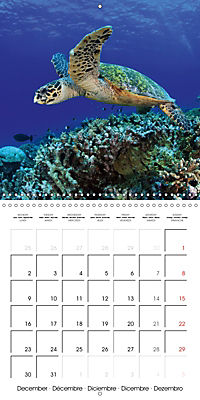Diving - The wonderful water world (Wall Calendar 2019 300 × 300 mm Square) - Produktdetailbild 12