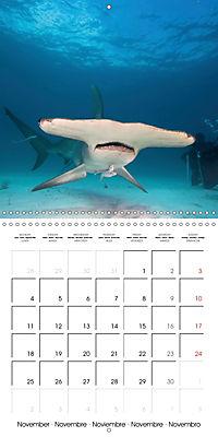 Diving - The wonderful water world (Wall Calendar 2019 300 × 300 mm Square) - Produktdetailbild 11