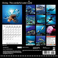 Diving - The wonderful water world (Wall Calendar 2019 300 × 300 mm Square) - Produktdetailbild 13